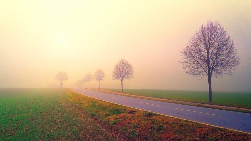 Bare trees along an empty road in the fall - Richway Biomat - Monarch Physical Therapy