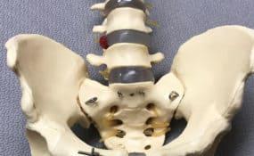 Pelvis Bone