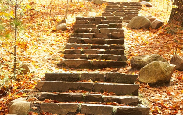 Set of rocky steps in the woods - Monarch VIP - Physical Therapy